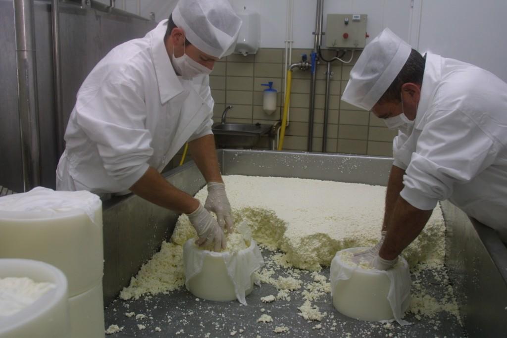 Elaboración artesanal de quesos de oveja curados y semicurados