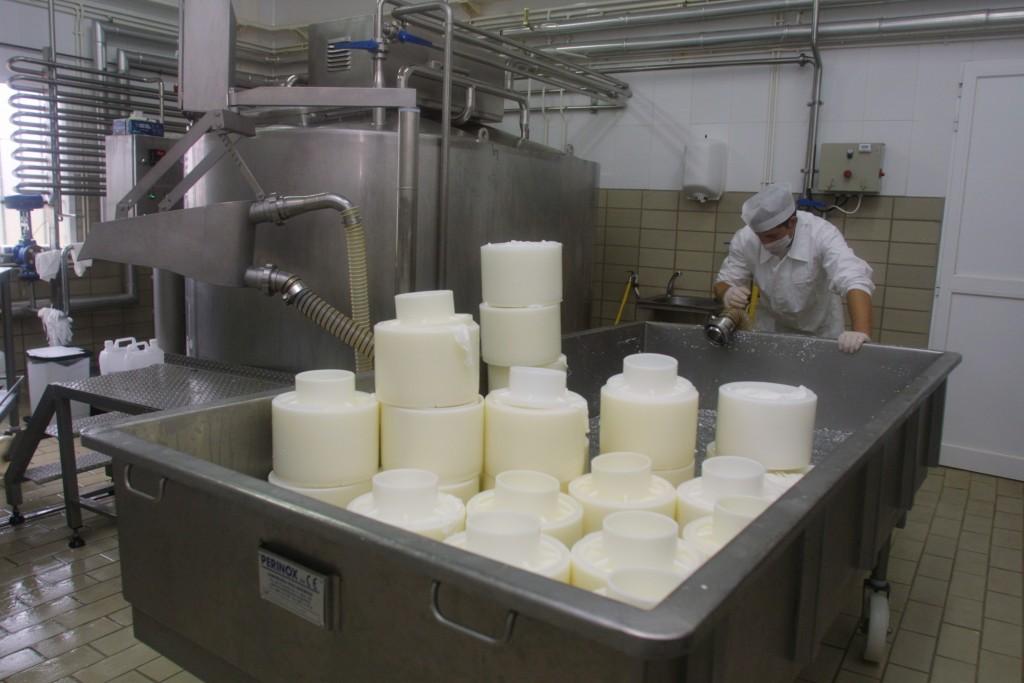 Producción de quesos artesanales de oveja
